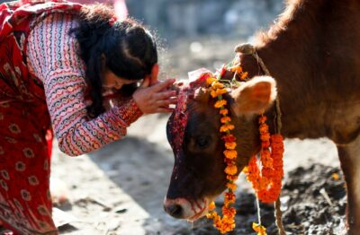 National Dish of Nepal - Cow
