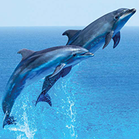 National Dish of Greece - Dolphin