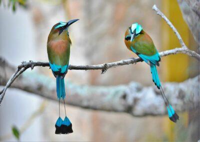 National animal of Nicaragua