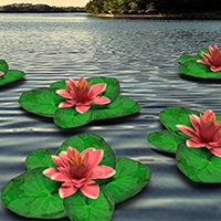 National Flower of Bangladesh -Water lily